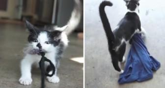 8 segni che ti fanno capire che il tuo gatto è in realtà... Un cane!