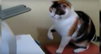 Gatto contro stampante: il duello vi farà SBELLICARE dalle risate!
