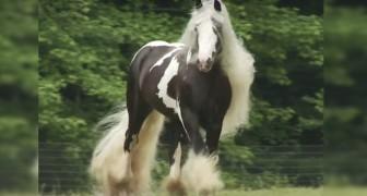 Geflecktes Fell und eine Rekord-Mähne: die Schönheit dieses Pferdes ist umwerfend