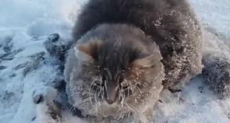 Ze treffen een kat roerloos aan op straat: als ze dichterbij komen, snappen ze waarom het dier niet beweegt!