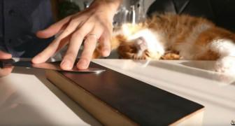Voici ce qui se produit quand on aiguise un couteau à 1$ à la perfection: pensiez-vous que c'était possible?