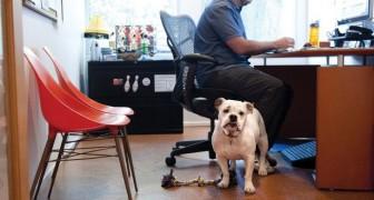 Sogni di portare il tuo cane con te a lavoro? In Germania è già realtà e ne sono tutti entusiasti