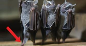 Filma dei pipistrelli poi capovolge l'inquadratura: quello che si nota è... SPASSOSO!