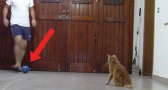 De vangcapaciteiten van deze kat zijn uitzonderlijk!