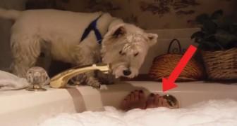 Questo cane curioso guarda la padrona fare il bagno, poi prende una decisione inaspettata!