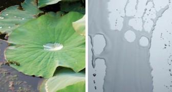Dai fiori di loto ai vetri autopulenti: ecco l'invenzione che nasce dall'imitazione della natura