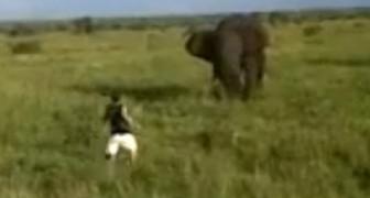 Un uomo ubriaco spaventa un elefante