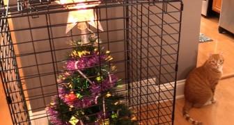 16 soluzioni che le persone hanno trovato per salvare l'albero di Natale dagli animali domestici