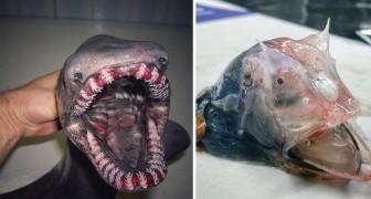 Questo pescatore ha fotografato gli esseri più strani che ha trovato nelle reti: il risultato è da film horror