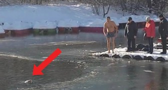 Le chien se noie dans le lac gelé : ce que fait cet homme fait de lui un héros
