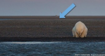 Una donna va in Alaska per fotografare gli orsi polari nella neve: invece ecco cosa ha trovato
