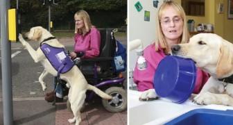 Questa donna riesce a vivere grazie al suo cane guida: ecco che cosa è capace di fare Byron
