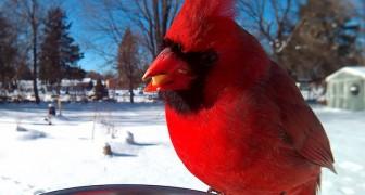 Dà da mangiare agli uccelli... ma intanto scatta loro irresistibili primi piani!