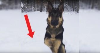 La padrona gli lancia la Palla: la ricerca del cane è disperata e... divertentissima!