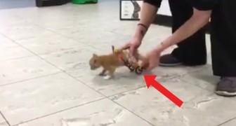 Dit katje kan weer lopen dankzij deze speciale constructie: de vreugde van het dier is duidelijk zichtbaar!