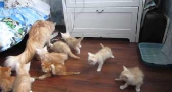 Tutti al riparo arriva Catbomb!