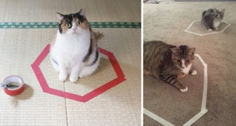 Allemaal binnen de cirkel: geen enkele kat kan weerstand bieden aan deze obsessie...