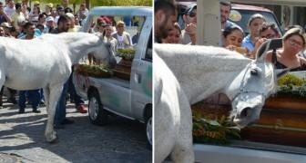 Ils amènent le cheval à l'enterrement de son maître : la réaction de l'animal fait mal au cœur...