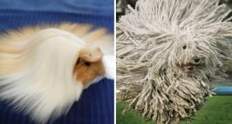 20 animaux qui ont une coiffure plus jolie que la vôtre!