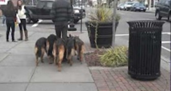 One man and his incredibly well trained dogs! Take a look ...