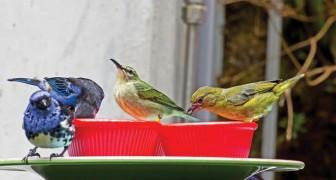 Vuoi aiutare gli uccelli a superare l'inverno? Ecco perché non devi MAI dargli del pane