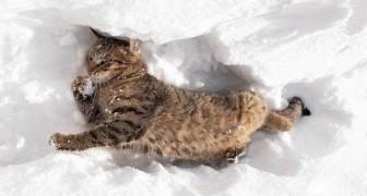 Gatti che giocano sulla neve Compilation