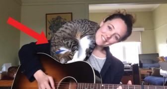 Dit meisje zingt haar nieuwe liedje, maar haar kat zorgt ervoor dat haar optreden niet geheel moeiteloos verloopt!