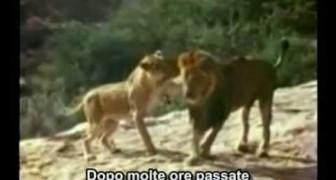 La fantastica storia del leone Christian
