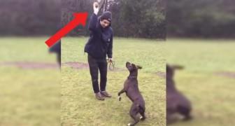 De meest waakzame hond ter wereld: wat hij doet nadat zijn baasje de bal lanceert, is onbeschrijfelijk