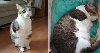 Maak kennis met Able, de kat met 2 poten die in staat is om te springen en... om harten te veroveren!
