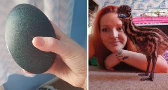 Een meisje koopt op internet een ei voor 30 dollar en krijgt thuis een schitterende exotische vogel!