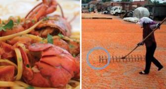Gamberi colorati: ecco le immagini inquietanti di come vengono resi appetitosi i crostacei
