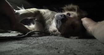 De angst in de ogen van deze hond is duidelijk af te lezen: als ze het dier naar buiten weten te trekken, trekt ze al snel bij!