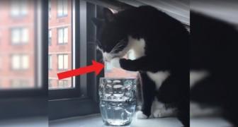 Se anche il vostro gatto fa così sappiate che un motivo c'è. Scoprite qual è e cosa dovete fare.