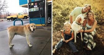 Il s'approche du chien en le croyant perdu: le message sur le collier lui arrache un sourire