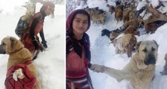 Una delle sue capre partorisce nella neve: la giovane allevatrice la salva con l'aiuto del cane