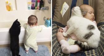 Zijn katten en kinderen een goede combinatie? Na het zien van deze foto's zul je daar niet meer over twijfelen!