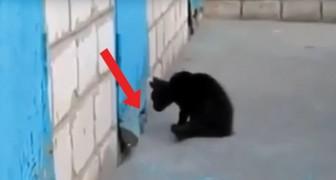 Een kitten ziet de snuit van een hond tevoorschijn komen: dit is hoe een spel verandert in een redding!