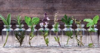 10 erbe che puoi crescere in acqua e tenere in casa per un anno intero