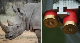 Auf der Jagd nach Jägern: Dieser Park hat das Wildern mit einer brutalen Methode besiegt
