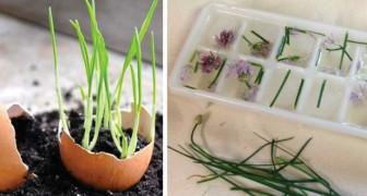 16 astuces que les amateurs de jardin vont adorer connaître