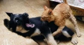 Hunde, die Angst vor Katzen haben