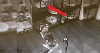 Een nacht bij de dierenarts: deze husky is het daar niet mee eens en organiseert een uitbraak... voor iedereen!