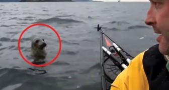 Een koppel in een kajak wordt achtervolgd: het gedrag van dit dier blaast ze omver!