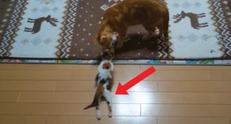 Er findet am Fluss ein Kätzchen: der Weg zur Heilung wird euch rühren