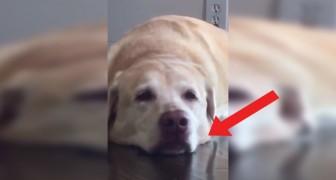 Hon ber sin hund om att le: hunden har ett jättebra svar