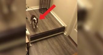 Questo cucciolo ha il TERRORE di scendere il gradino: il prezioso aiuto arriva da un Esperto