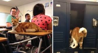 Maak kennis met Bubba, de kat die niets liever doet dan naar school gaan!