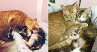 La chatte donne naissance à 4 chatons: la façon dont le papa-chat l'assiste est adorable