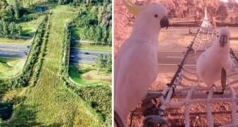 Les écoducs respectueux de la nature: grâce à ces passages, TOUS les animaux sont en sécurité